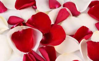 Польза лепестков розы — какая польза от лепестков роз