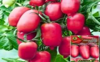 Томат Абаканский розовый: характеристика и описание сорта, урожайность с фото