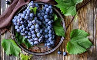 Топ сортов винограда для себя: лучших, сорта чемпионы, недостатки видов