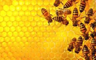 Естественное и искусственное размножение пчелиных семей