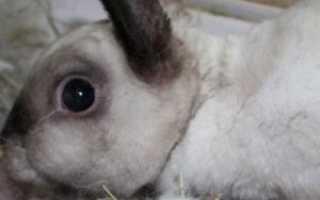 Что делать, если кролики не рожают: 11 распространённых причин и их устранение