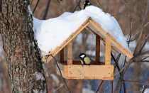 Самостоятелное изготовление кормушек для птиц: изучаем варианты