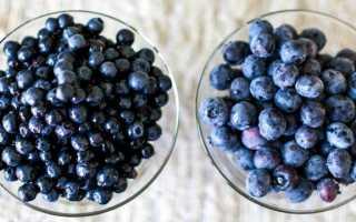 Голубика и черника: в чем разница, основные отличия, что полезнее