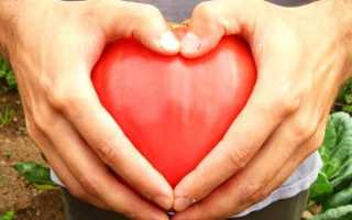 Томат Воловье сердце: описание сорта, характеристики, особенности выращивания