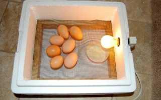 Самодельный инкубатор для яиц своими руками: схемы и описание