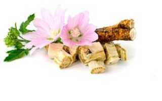 Алтей, лечебные свойства и противопоказания, Здоровое питание