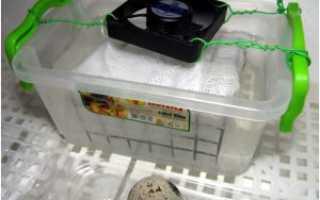 Вентиляция инкубатора: виды и влияние на вывод птенцов