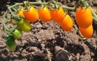 Уход за томатами — как вырастить помидоры без полива