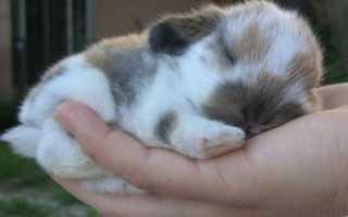 Защита кроликов от комаров: какие средства использовать и как лечить укусы