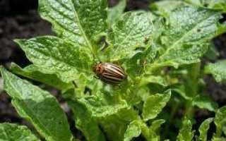 Эффективное средство от колорадского жука Наповал