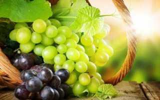 Учимся пересаживать виноград осенью: практичные советы