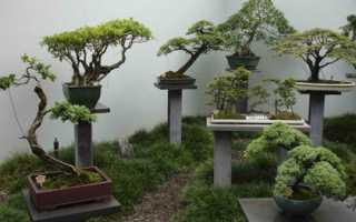 Ваш миниатюрный сад своими руками