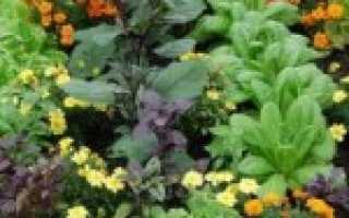 Что такое аллелопатия растений и деревьев? Аллеопаты: сада, огорода