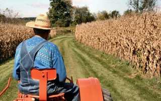 Фермерское хозяйство: с чего начать? Технология бизнеса