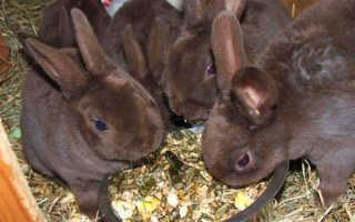 Когда отсаживают крольчат от крольчихи, в каком возрасте, когда выходят крольчата из гнезда, видео