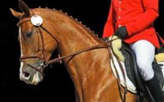 Амуниция для лошадей и всадников: что нужно и как сделать своими руками
