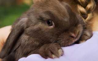 Можно ли кроликов брать за уши и как правильно держать?