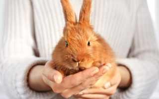 Как дрессировать кролика в домашних условиях?