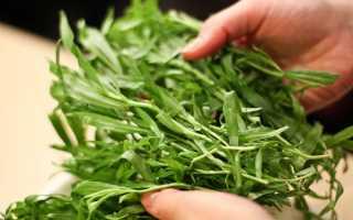 Трава тархун — лечебные свойства и противопоказания