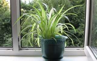 Подборка лучших растений для вашего ребенка