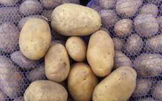 Сорт картофеля Гала (Gala): характеристики и внешний вид, посадка картошки и хранение урожая
