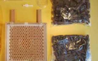 Джентерский сот для вывода пчелиных маток: описание, инструкция