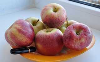 Яблоня — Гала: описание сорта, фото, отзывы