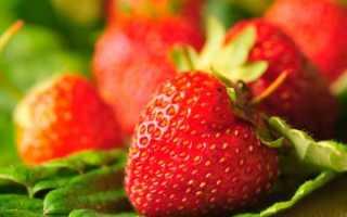 Секреты выращивания клубники: лучшие сорта, посадка и советы по уходу за ягодой