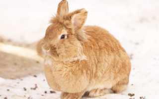 Как чувствуют крольчата зимой, замерзают после окрола или нет, условия их содержания, подготовительные этапы