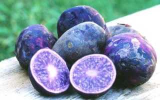 Фиолетовая или синяя картошка: полезные свойства, сорта, польза и вред