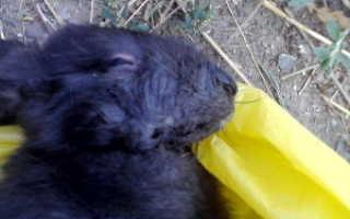 Пастереллез у кроликов симптомы, признаки заболевания и методы лечения (фото)