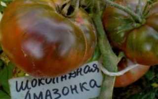 Томат Тлаколула де Матаморос: описание, разновидности сорта, урожайность с фото