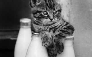 Всё о молоке