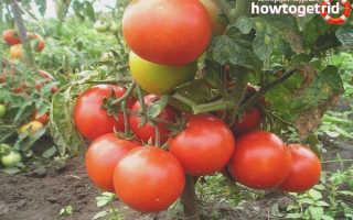 Томат Летний сад — описание и характеристика сорта