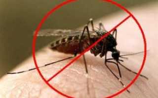 Борьба с комарами на дачном участке: эффективные методы