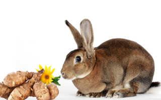 Можно ли давать кроликам топинамбур и его листья?