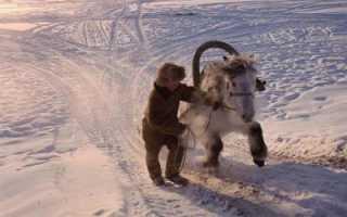 Якутская лошадь: характеристики, разведение и необходимый рацион питания
