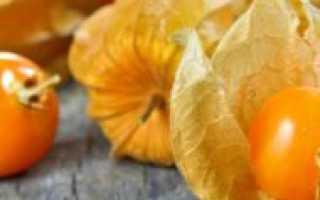 Физалис: полезные свойства, как употреблять, польза и вред для здоровья