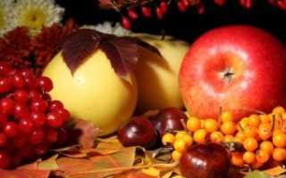 Лучшие советы по уходе за яблоней осенью