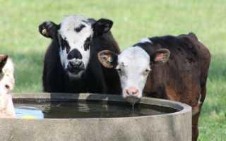 Поилки и кормушки для коров своими руками
