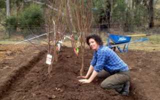 Как правильно посадить дерево: посадка дерева и уход за ним, подготовка саженцев, выбор сроков и этапы работ
