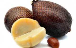 Салак (змеиный фрукт): как его есть, полезные свойства и вред