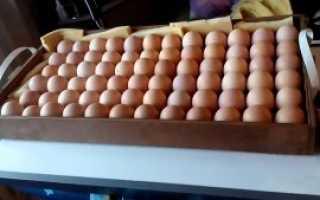 Как переворачивать яйца в инкубаторе: основные ньюансы