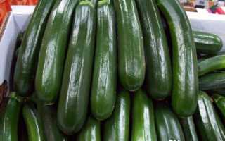Цуккини: польза и вред длинноплодного зеленого кабачка