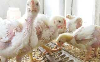Витамины для цыплят бройлеров в домашних условиях