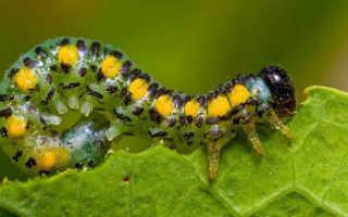 Защита огорода от вредителей и болезней, Наша