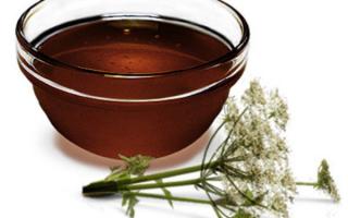 Дягилевый мёд: полезные свойства и противопоказания