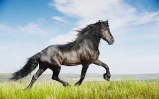 Породы лошадей с фото и описанием, Мои лошадки