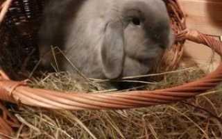 Транспортировка кролика — как его перевозить