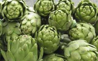 Артишок: практические советы, как вырастить овощ в домашних условиях